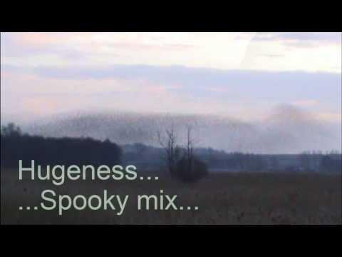 Hugeness Spooky Starlings... Starling behaviour....
