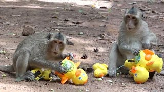 Make fun with monkeys - Monkeys playing human baby plays like baby duck