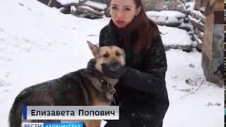Собака, которую жестоко избил житель Неманского района, окончательно поправилась