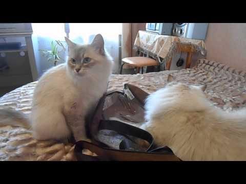 Невские Маскарадные Коты! Казимир Снежная зима!