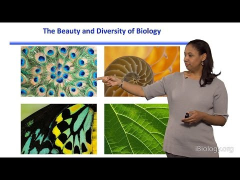 Kristala L. J. Prather (MIT) Part 1: Introduction to Synthetic Biology and Metabolic Engineering