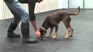 "Teaching Your Dog To ""drop"""