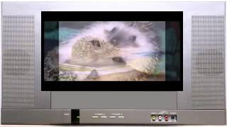 Смешные ёжики. Ёжики фото. Веселые животные.  Funny hedgehogs. Hedgehogs photo. funny animals