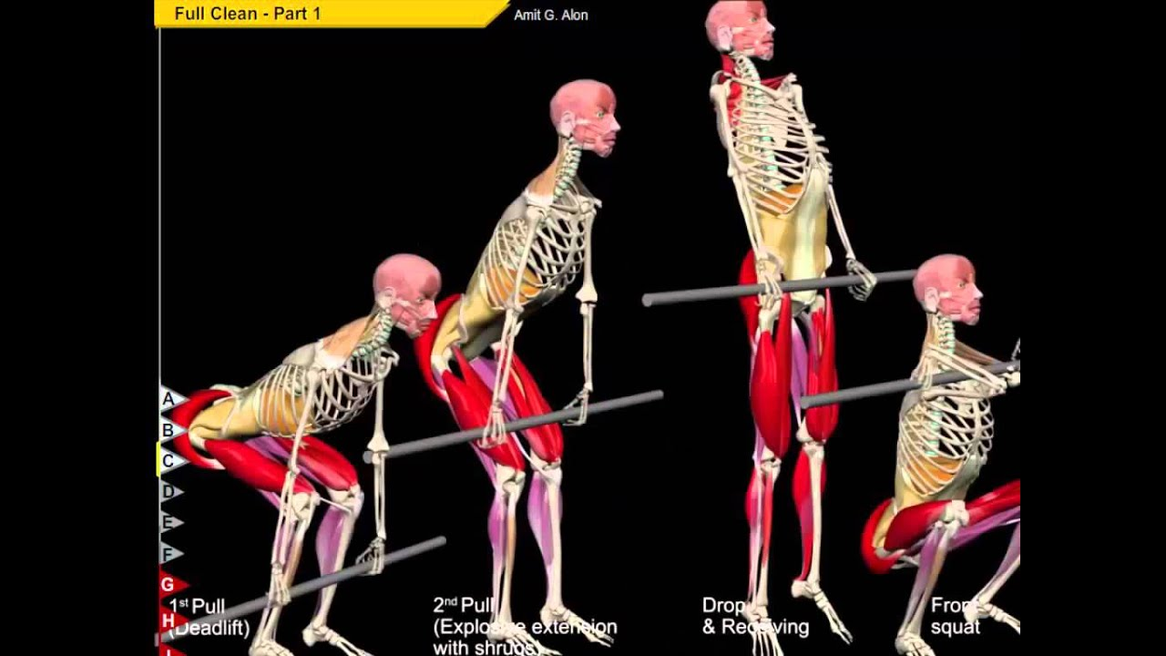Clean Anatomy and kinesiology - YouTube