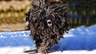 Most ILLEGAL Dog Breeds In The World! (part 2)