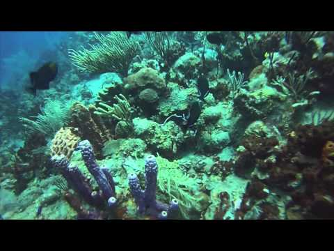 Dive Trip to Saba, The Netherland Antilles.