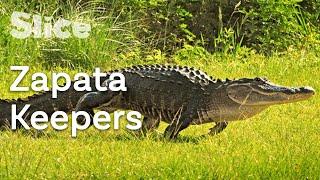 Download Mp3 Cocodrileros Saving the Cuban Crocodile SLICE