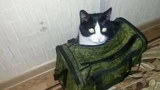 ЧЕРНО БЕЛЫЙ кот СТЁПКА 6