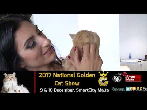 MFGC National Golden Cat Show - Malta 2017 / Promo
