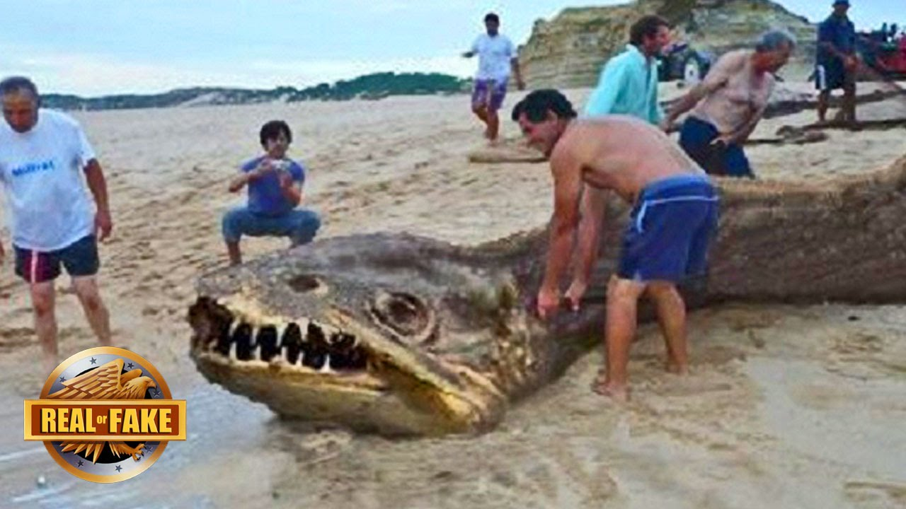 Real Giant Creatures | www.pixshark.com - Images Galleries ...