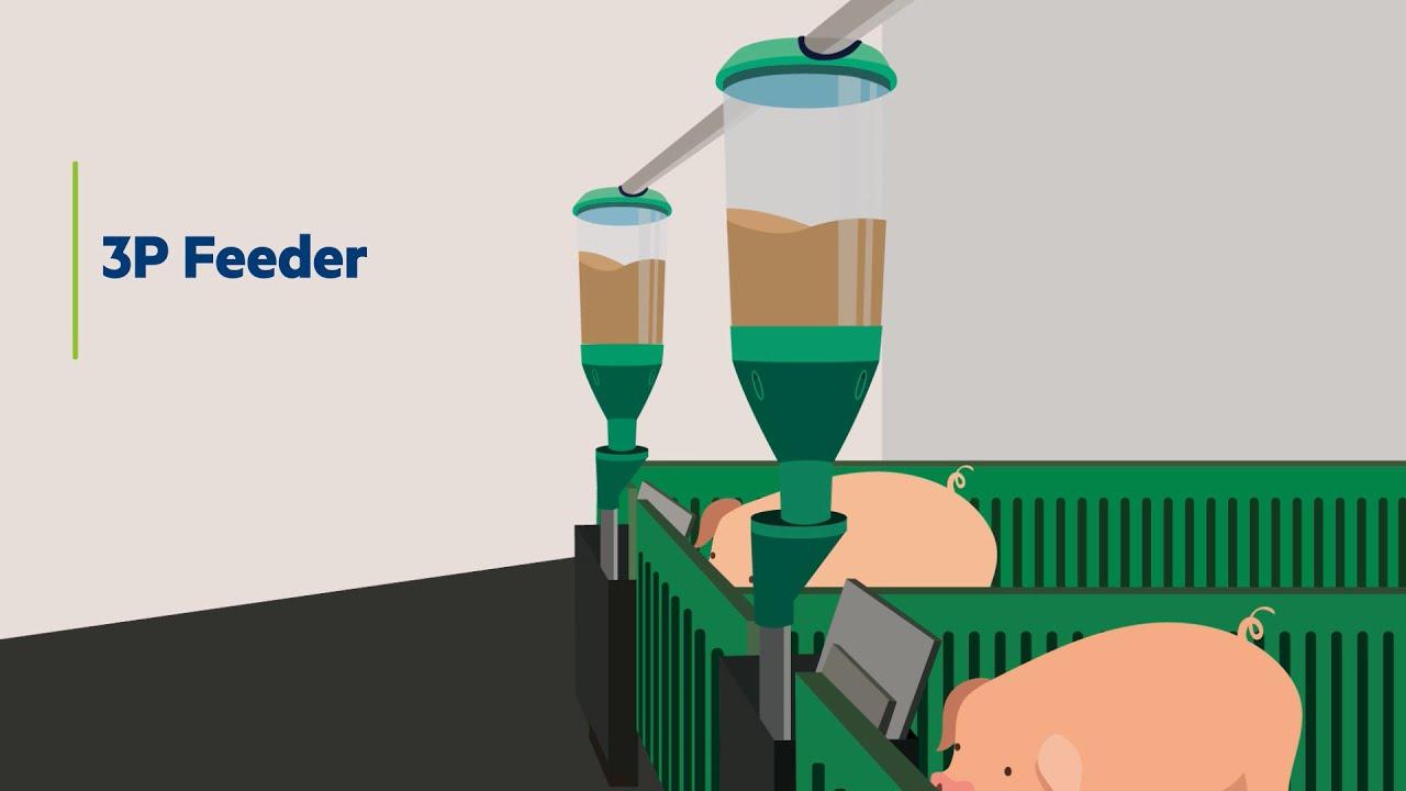 Feeding Solution   3P Feeder