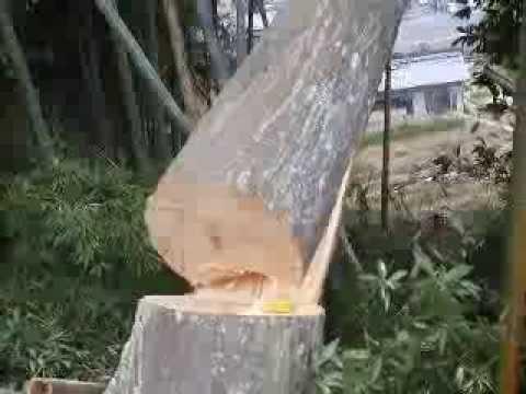 ~シデの木の倒木~