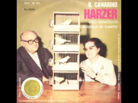 Il canarino Harzer - Uso didattico scuola di canto