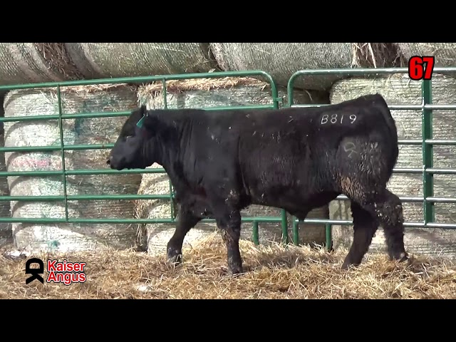 Kaiser Angus Ranch Lot 67