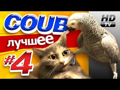 Видео: Смотри лучшее - Coub HD 4