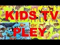 HAPPY Best Animals for Kids and Families Pets for Kids Handplaytv Learn animals FOR YOUR CHILD