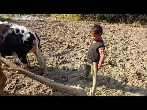 Jumla children .I ma Trying  land use working batter ...