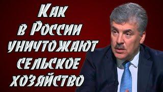 видео Сельское хозяйство России.Обрезка яблони и груши в период роста