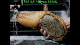 4,5 Milyon Dolar kazandiran Deniz Ürünü | GeoDuck - Penismuschel