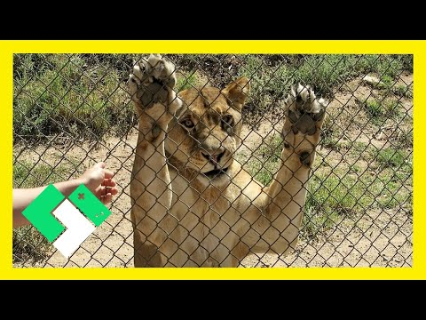 OUT OF AFRICA WILDLIFE PARK (10.14.15 - Day 1292)