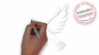 Как нарисовать голубя несущего мир