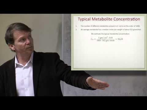 Lecture 17. Constraints