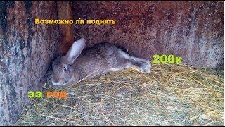 Бизнес в деревне на выращивании кроликов, 2