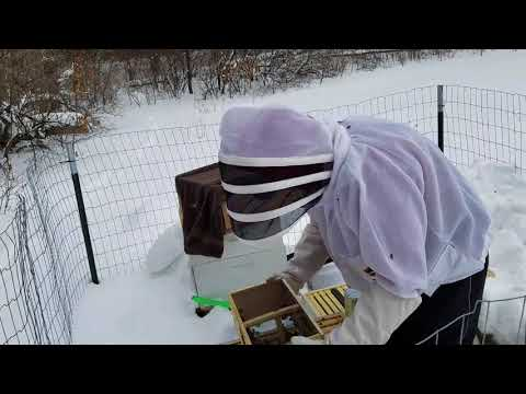 Cold Weather Bee Install