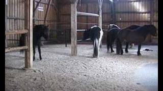 Active Stable for Natural Horse Management