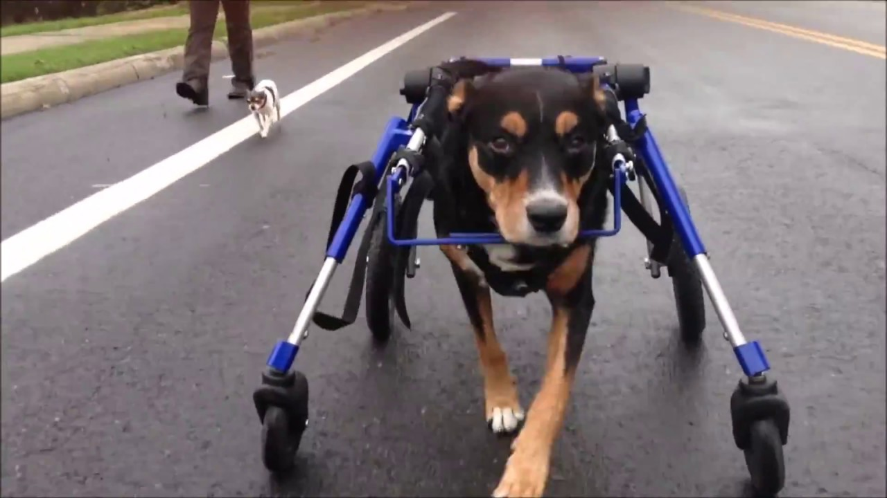 Fully Supported Dog Wheelchair