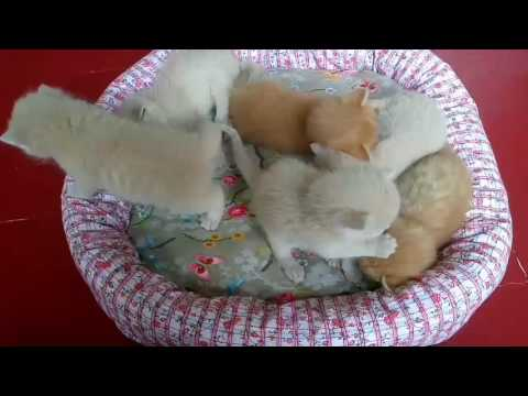 Kittens 2 weeks