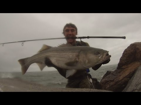 Surf Casting Rhode Island 30 And 25 Pound Stripers On Bucktail Jigs