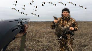 Столько гусей я еще не видел Охота на гуся 2021 мр155