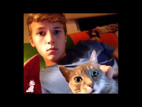 Ultimate Cat Vines Compilation