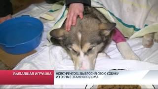 Новоуренгоец выбросил свою собаку из окна 8 этажного дома
