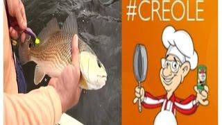 Redfish & Tony Chachere's Seasoning On Castin' Cajun