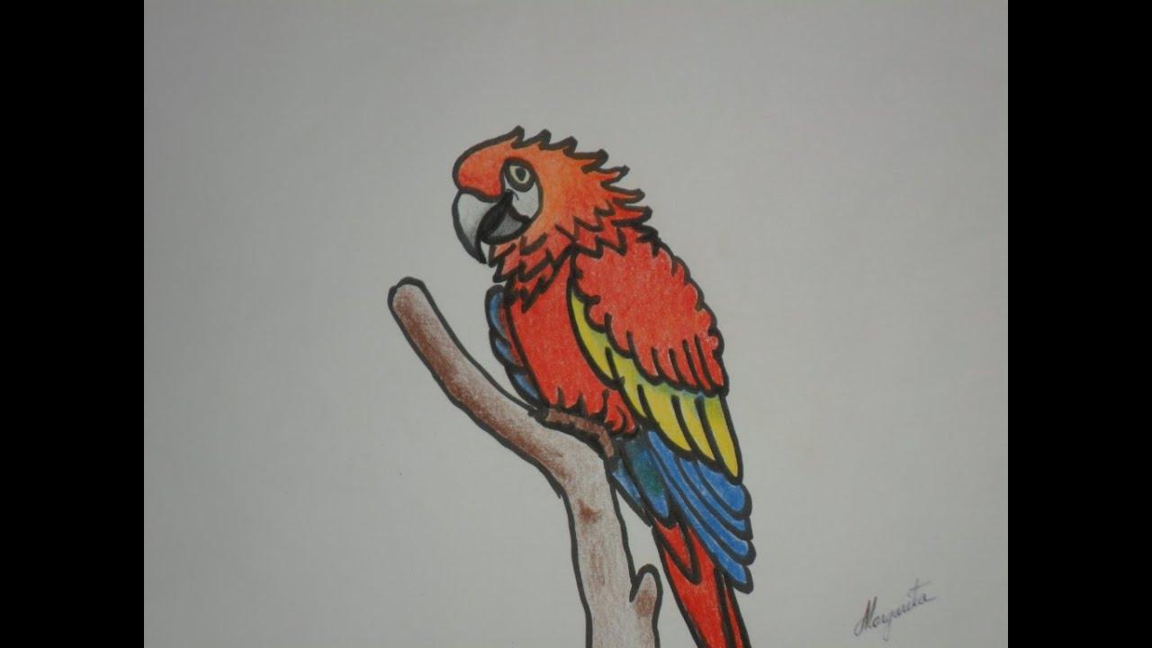 Como dibujar una GUACAMAYA en caricatura. DIBUJO INFANTIL. - YouTube