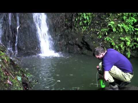 Hawaii Minute. Muliwai Trail.