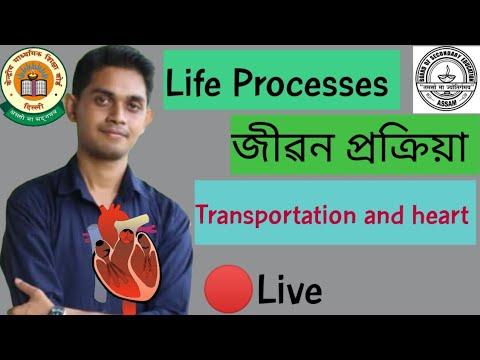 Class 10 Science Biology । Human Heart। Life Processes । P 7