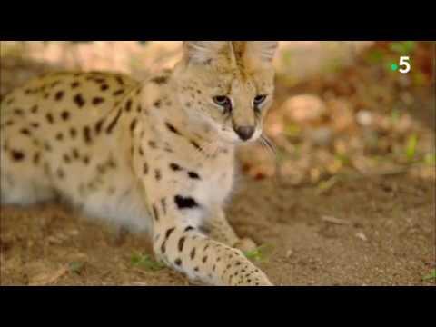 Histoires de chats - saison 1 pisode 2  - Flin de compagnie