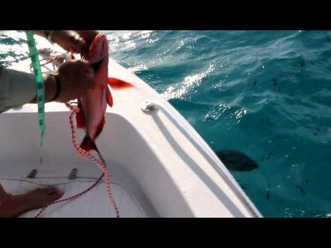 GT feeding @ Farquhar atoll, Seychelles - November 2011
