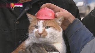 NEW! Правдивая история кота Мостика! Просто прелесть!:)