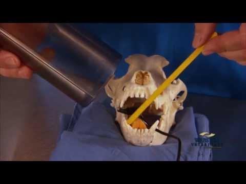 Webster Vet Digital Dental X-Ray Training
