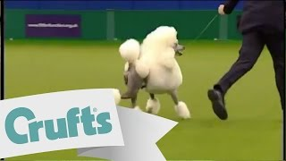 Utility Group Winner | Crufts 2009