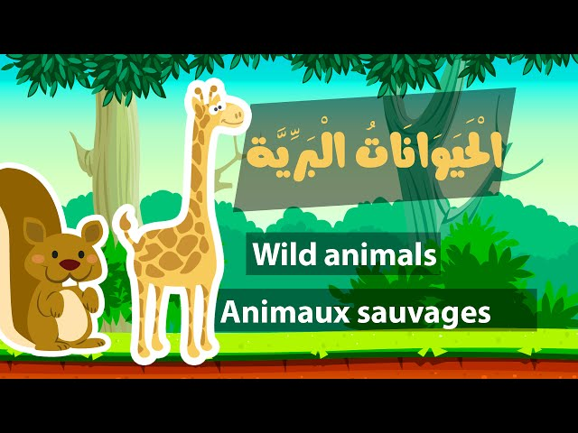Learn arabic (wild animals) – Apprendre l'arabe (animaux sauvages) – اسماء الحيوانات البرية بالعربية