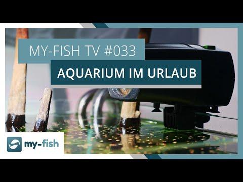 10 Tipps um Aquarien im Urlaub zu versorgen | my-fish TV