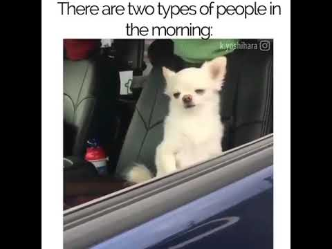 Funny Meme Types : There are two types of people in the morning. funny youtube