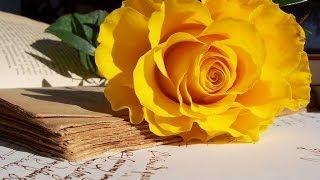 LỖI CỦA HOA HỒNG VÀNG -  thơ Lương Đình Khoa