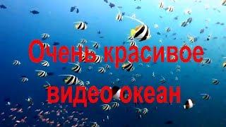 Очень красивое видео океан. Подводные съёмки. Морская флора и фауна. Рыбы. Кораллы. Морское дно. Дно