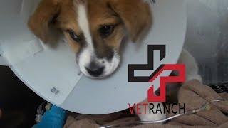 One Tough Pup thumbnail